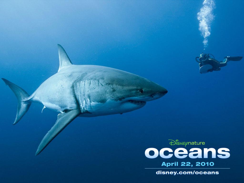 disneynature oceans images great white shark hd wallpaper