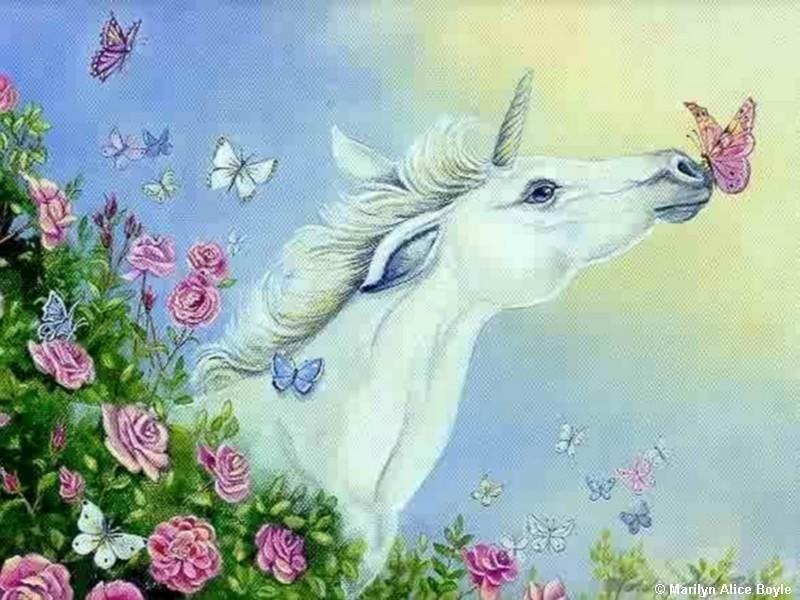 unicorn and تیتلی kiss
