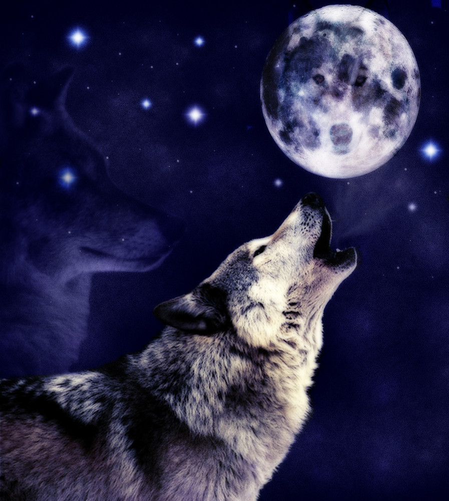 Anndabfmv wolf