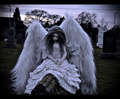 Cemetery Angel - Ball Jointed Doll - cemeteries-and-graveyards photo