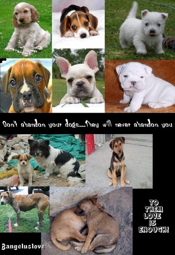 Don't abandon them...
