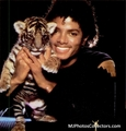 Mike and a cute little tiger - michael-jackson photo