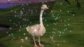 Odette as Swan