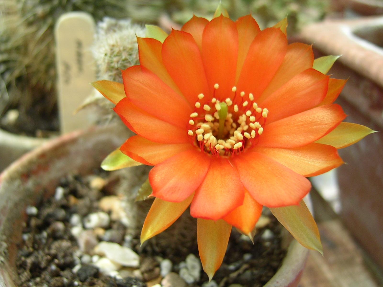 Orange Flowers Fanpop