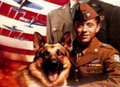 chips - chips-the-war-dog photo