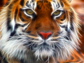 Amur Tiger Fractal