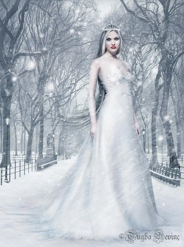 yorkshire rose images fairy queen of winter wallpaper and. Black Bedroom Furniture Sets. Home Design Ideas