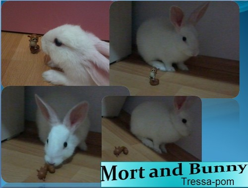 Mort and Bunny