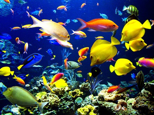 Beautiful Pictures karatasi la kupamba ukuta possibly with a goldfish entitled ocean life