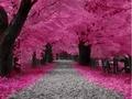 गुलाबी autumn