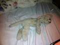 I NEED HELP PLEASE!!!! - stuffed-animals photo
