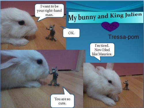 My bunny and King Julien