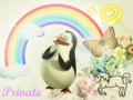 Private  - penguins-of-madagascar wallpaper