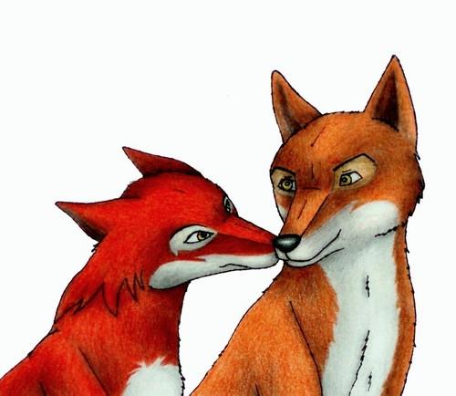 rubah betina and rubah, fox