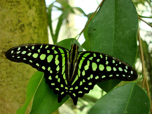 green butterfly - butterflies Photo