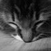 Adorably Kitty icons! - cats icon