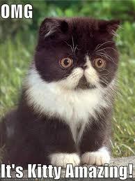 Kitty Amazing