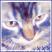 Kitty Icons! - cats icon