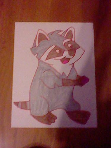 Meeko the raccoon