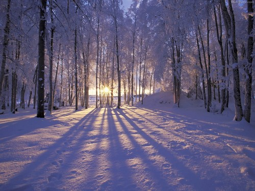 Wondeful Winter wallpaper - cynthia-selahblue-cynti19 Wallpaper
