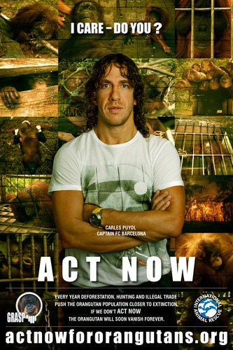 Act Now for Orangutans - Puyol