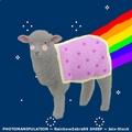 For Fun:; nyan lamb FTW