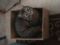 cat in a box!!
