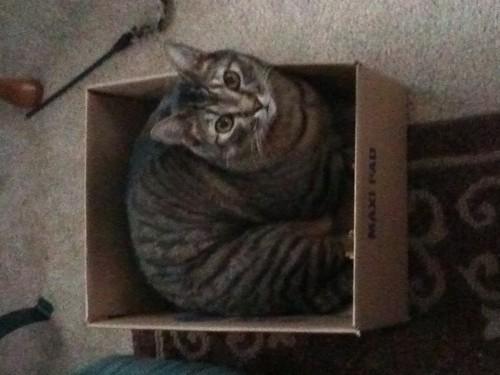 cat in a box!!