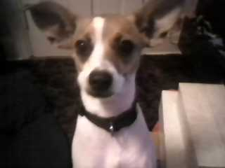 my dog - Kandy