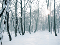 Beautiful winter - winter photo