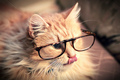 gatos wearing glasses