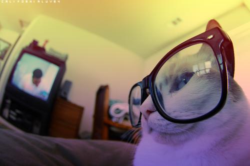 Gatti wearing glasses