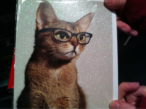 chats wearing glasses