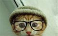 고양이 wearing glasses
