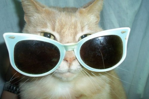 Cats Images Wearing Glasses Wallpaper And Background Photos