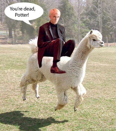 Draco Malfloy and his alpaca