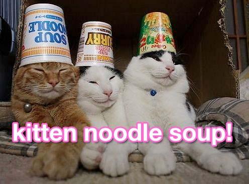 Kitten Noodle la minestra, zuppa