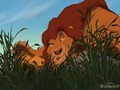 Pouncing lesson - the-lion-king wallpaper