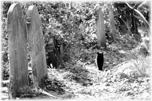 Black Cat In Cemetery