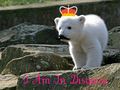 Polar Bear Cubs - polar-bears photo