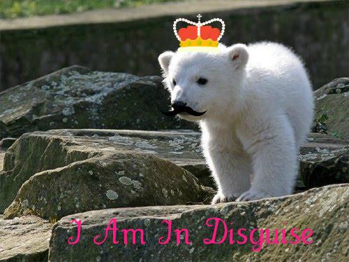 Polar beer Cubs