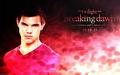 Taylor Lautner Jacob Black Wallpaper - taylor-lautner wallpaper