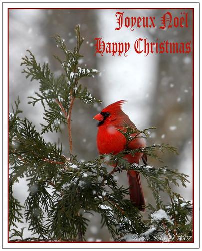 Have A Beautiful क्रिस्मस Barbara <3
