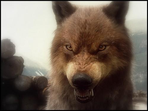 bd wolves 2