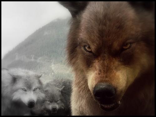 bd 늑대