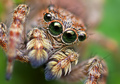 cute jumping spiders