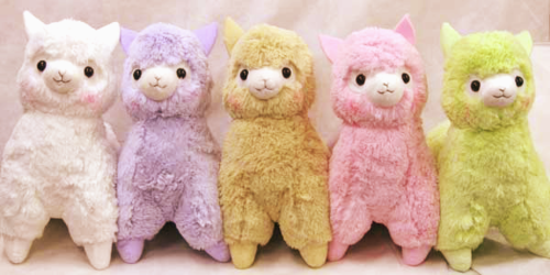 Random wallpaper called llama plush toys! <3