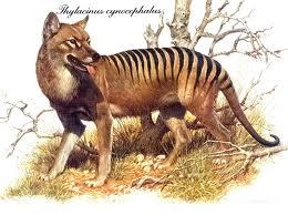 the tigerwolf