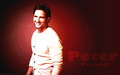 Peter Facinelli  Wallpaper - peter-facinelli wallpaper