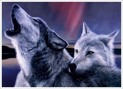 Arctic Волки